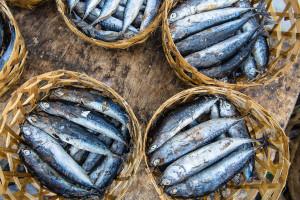 Bali-Indonesia-Fish-Basket-Market