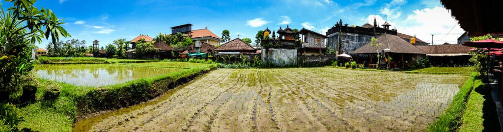 Bali-Indonesia-Ubud-Rice-Pano