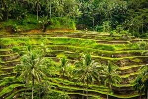Bali-Indonesia-XE2-Tegalalang-Terrace